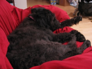 Gadget napping on red quilt on couch.