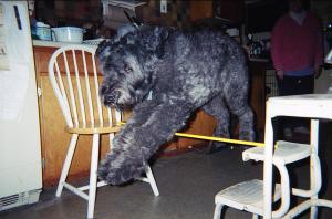 Gadget jumping over a pole across two kitchen chairs