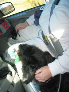 Gadget with his head on Sharon's thigh in the van