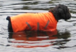 Gadget in his reflective orange vest, in the water up to his armpits
