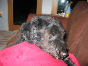 Close-up of Gadget's head, looking tired, on couch
