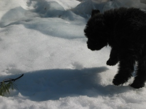 Baby Barnum leaps in snow