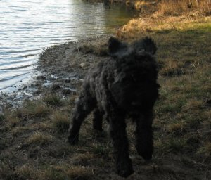Puppy Air Barnum at the Pond