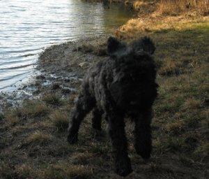 Puppy Air Barnum at the Pond