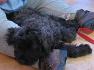 Tired Puppy Asleep across Betsy's legs