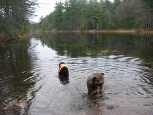 Gadget and Tessa take a dip
