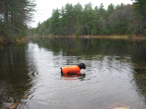 Gadget swims