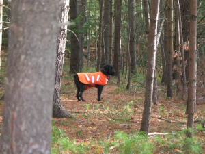 Gadget stands in forest