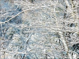 Ice storm trees - photo by Judy Stalus