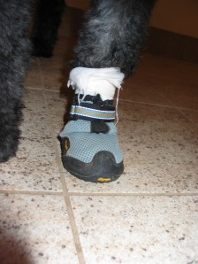 Doggy Nikes