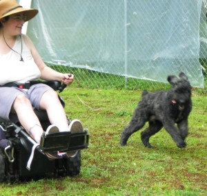 Puppy Barnum races Sharon in the superpowerchair