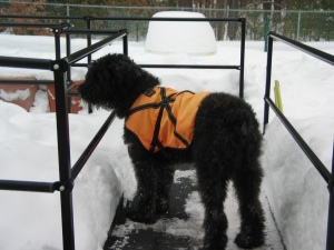 Barnum in orange vest on ramp surrounded by snow