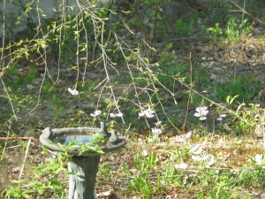 Gray carved stone birdbath, the trunk resembling a tree trunk, with 3 little statues of birds and chipmunks around the basin's edge. It seems among old brown leaves and new green shoots coming out of the ground, overhung by a small ornamental tree with pale pink flowers that is just beginning to get green leaves and buds. one green vine is snaking up the bird bath's near side.