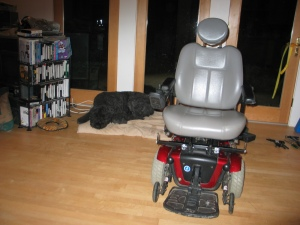 Powerchair reassembled. In the foreground, the chair, with a shiny gray captain's seat and red metal base with gray wheels. Behind and to the left, Barnum naps on his tan organic dog bed.