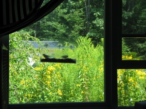 Framed by window panes, a clear lucite feeder on the window in the foreground has two birds in it, though they are in shadow and not identifiable as to species. Outside the window is lush, tall green weeds and wildflowers, especially gold flowers that resemble very tall black-eyed susans. The sun is shining brightly, casting a golden glow on the greens and yellows.