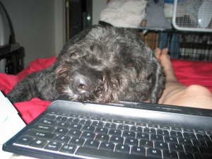 In the foreground is a black cordless computer keyboard. Sharon's right leg from the knee down is visible, lying on a red comforter. Her left leg is hidden by Barnum with his big, hairy black head, eyes shut, resting on her left knee and thigh, his nose on the edge of the keyboard. His hind end is stretched out behind him on the rest of the bed.