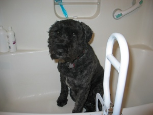 Barnum sitting in a white fiberglass bathtub with a large white grab bar on the edge of the tub closest to the camera.
