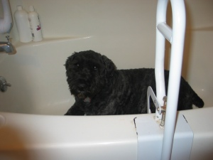 Barnum lying down in bath tub
