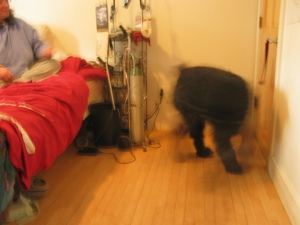 Barnum is whirling from the door, which is now shut, toward Sharon sitting on the bed. He's moving so fast that he's a blur, with his left front and right rear legs just shadows of movement.