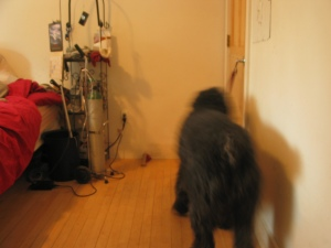 Blurry picture of Barnum from behind, pulling purple tug cord on door handle.