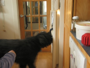 Barnum stands back a few inches from the fridge door which is now open a few inches.