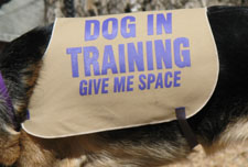 A tan vest that covers from shoulder to waist with very large purple capital letters that says Dog In Training and below that in smaller letters Give Me Space.