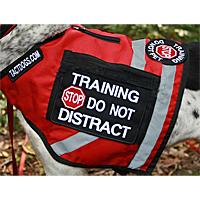 Does A Service Dog Need A Vest