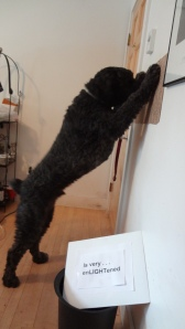 "Side view of Barnum standing on his hind legs with his forepaws resting on the wall, his nose pressed to the wall between them. (The light switch is blocked from view by his paws.) Sign in the foreground says, ""Is very enLIGHTening."""