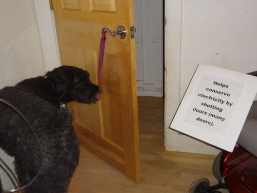 """Barnum nudges wood door shut with his nose. Sign says, """"Helps conserve electricity by shutting doors (many doors)."""""""