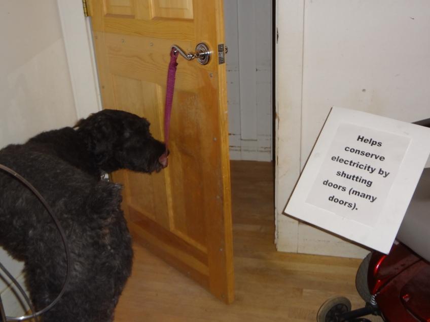 Dog Faming Shutting Bedroom Door After Gadget