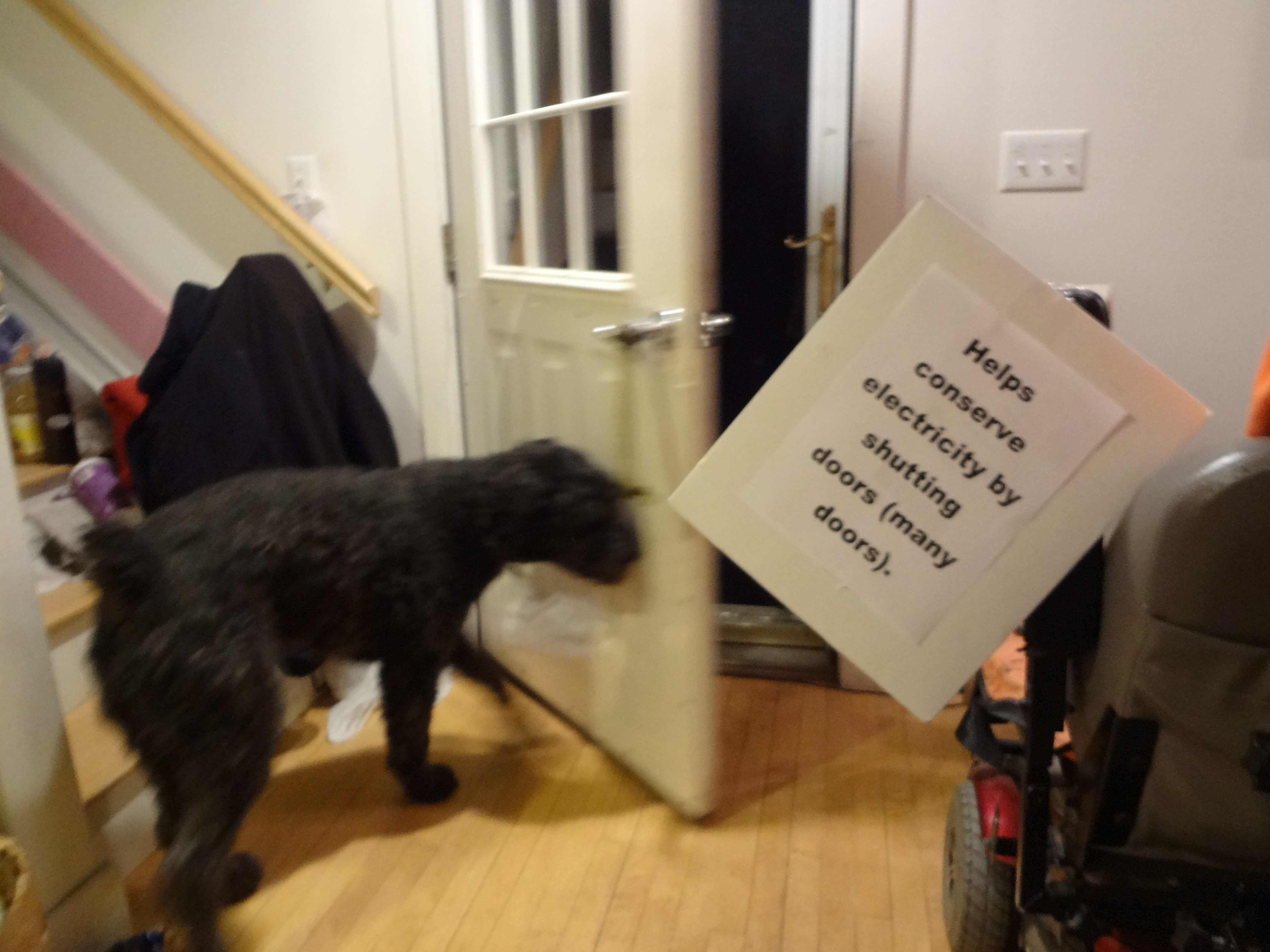 Action shot of blurry Barnum nudging shut a heavy door to the outside. Sign again & Dog Faming u2013 Shutting Outside Door | After Gadget