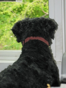 Back of Barnum's head and back as he looks out the window towards a green, leafy view outside.