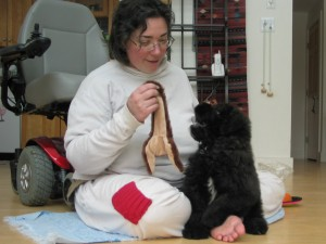 Barnum and Sharon sit on the floor. Barnum is a fluffy black 10-pound fuzzball with a white blaze on his chest. Sharon holds a skinny, long hedgehog toy in the air, and puppy Barnum has his mouth open and a paw up, ready to grab it.