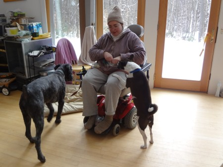 Sharon in her powerchair in front of glass doors with snowy wonderland behind. Mina, a small brown-and-white Basenji with prick ears and a curly tail, has her front paws on Sharons lap, nosing her hands that hold treats. Barnum is heading for his mat next to Sharons chair.